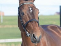 Bamako offspring continues to do well